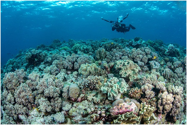 Wakatobi Island, Haven-Gem for Diving Addicts