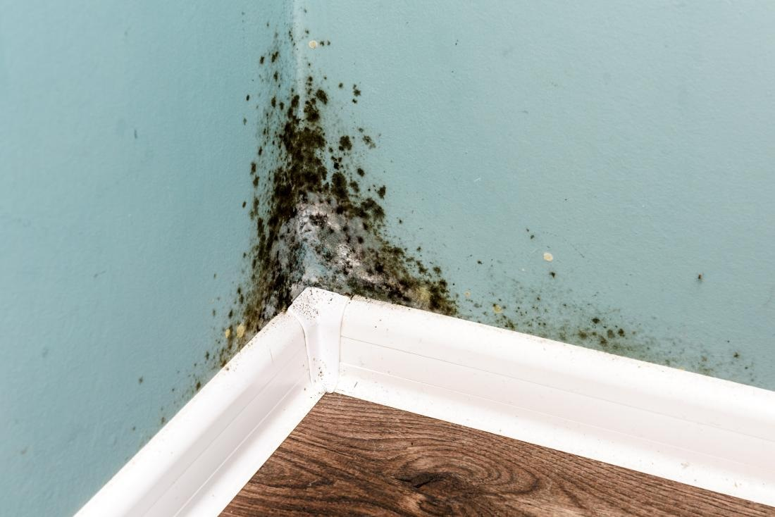 Things to Know About Black Mold