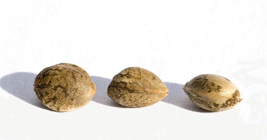 How to Spot and Avoid Buying Fake Weed Seeds